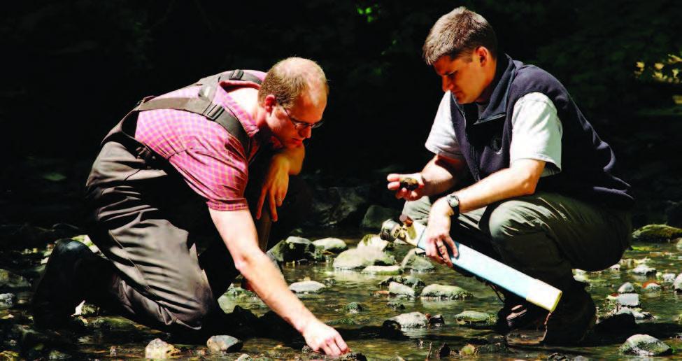 Examining a Stream
