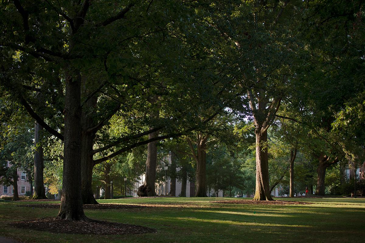 McCorkle Place trees