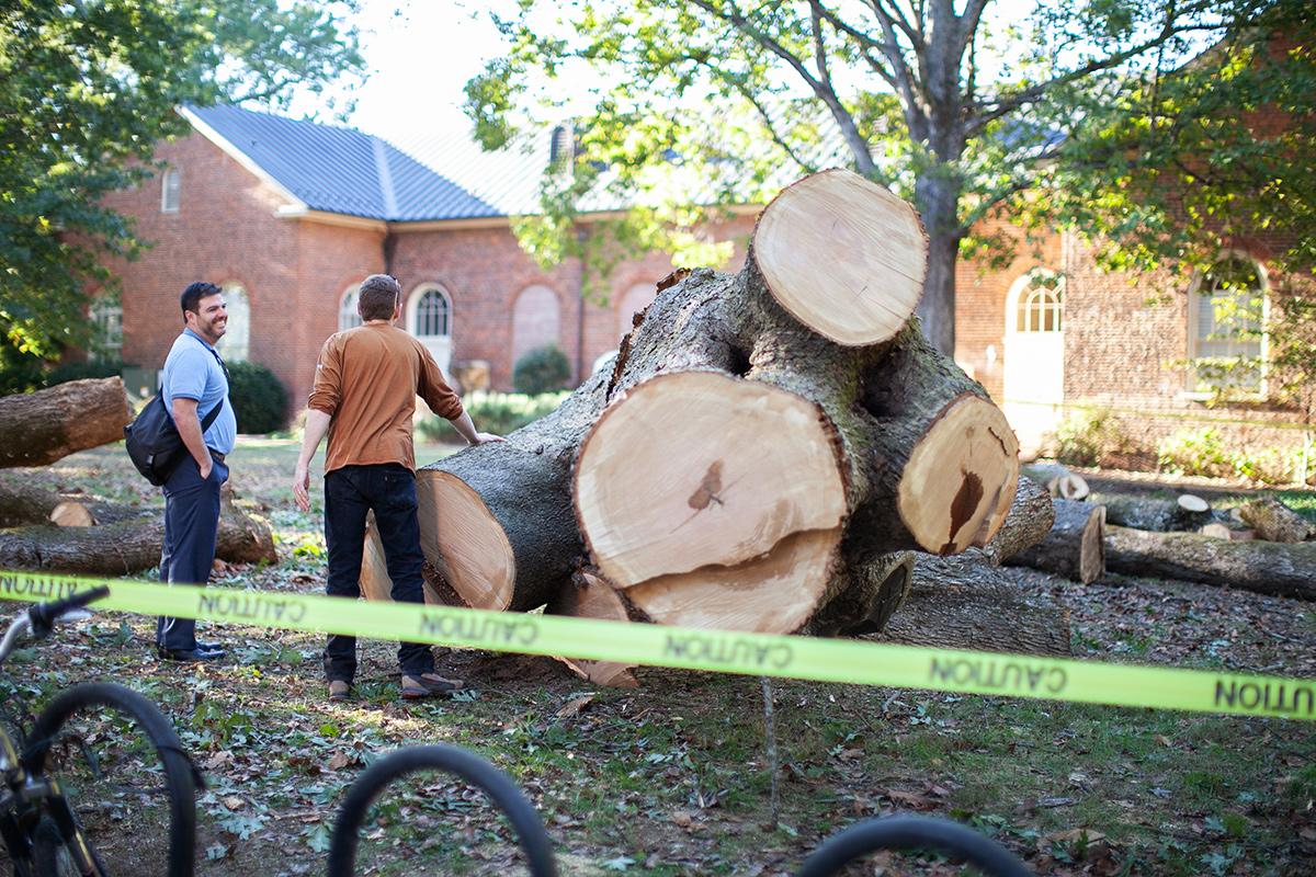 Inspecting post oak